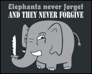 elephants-forget-forgive-funny-Favim.com-122491